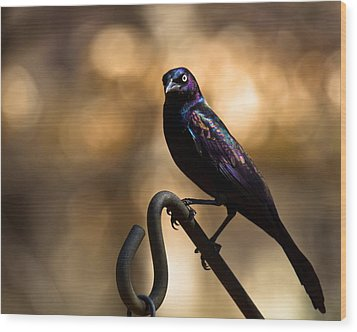 Wood Print featuring the photograph Common Grackle by Robert L Jackson