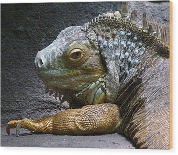 Common Iguana Relaxing Wood Print by Margaret Saheed