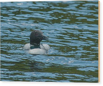 Wood Print featuring the photograph Common Loon by Brenda Jacobs