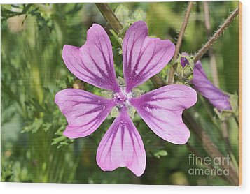 Wood Print featuring the photograph Common Mallow Flower by George Atsametakis