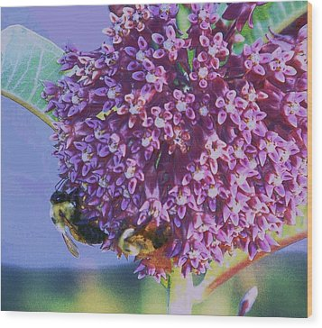 Wood Print featuring the photograph Common Milkweed by Shirley Moravec