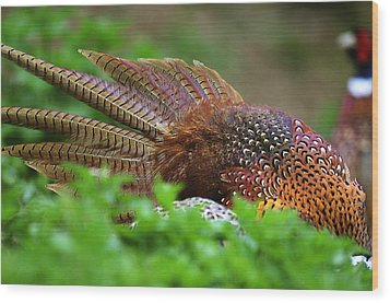 Common Pheasants Wood Print by Science Photo Library