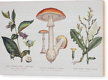Common Poisonous Plants Wood Print by English School