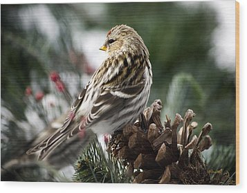 Common Redpoll Wood Print by Christina Rollo