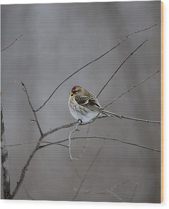 Wood Print featuring the photograph Common Redpoll by David Porteus