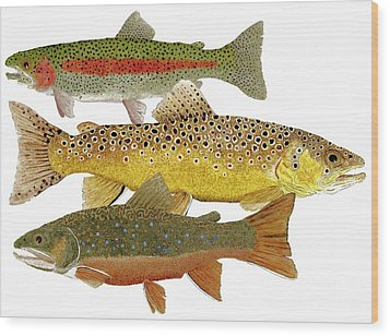 Common Trout  Rainbow Brown And Brook Wood Print