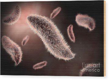 Conceptual Image Of Paramecium Wood Print by Stocktrek Images