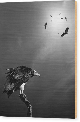 Conceptual - Vultures Awaiting Wood Print by Johan Swanepoel