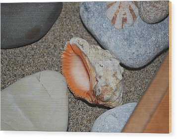 Wood Print featuring the photograph Conch 1 by George Katechis