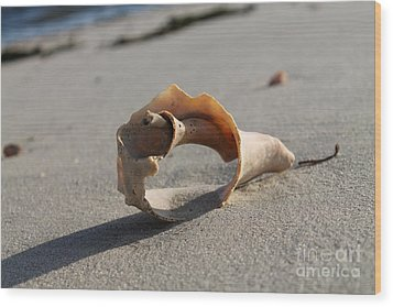 Conch On The Beach Wood Print by John Doble