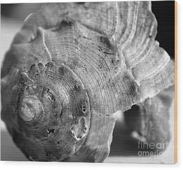 Conch Shell Wood Print