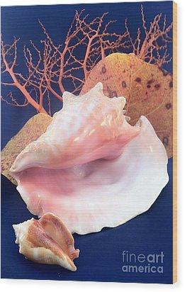 Conch Still Life Wood Print by Barbie Corbett-Newmin