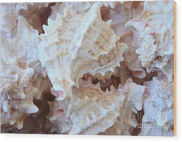 Conches Wood Print by Carol Groenen