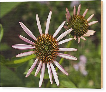 Cone Flower - 1 Wood Print by Charles Hite