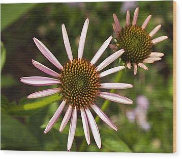 Cone Flower - 1 Wood Print