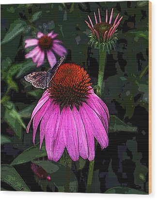 Cone Flower And Butterfly Wood Print