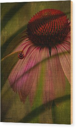Cone Flower And The Ladybug Wood Print by Lesa Fine