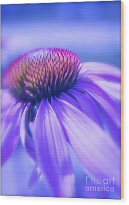 Cone Flower In Pastels  Wood Print