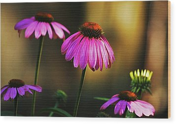 Wood Print featuring the photograph Cone Flower Shines... by Al Fritz