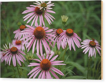 Cone Flowers Wood Print by Donald Williams