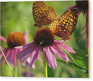 Coneflower Butterflies Wood Print