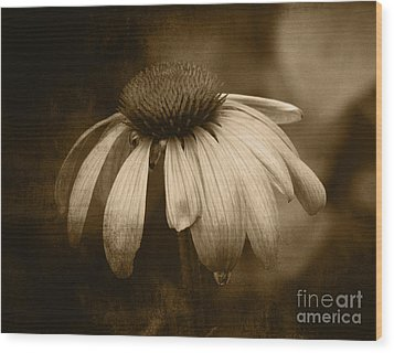 Wood Print featuring the photograph Coneflower In Sepia by Marjorie Imbeau