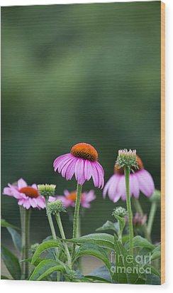 Coneflower Wood Print by Kay Pickens