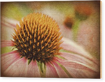 Coneflower Wood Print by Kelly Nowak