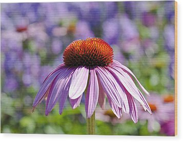 Wood Print featuring the photograph Coneflower by Lana Enderle