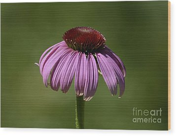 Wood Print featuring the photograph Coneflower by Randy Bodkins