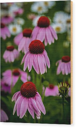 Coneflowers In Front Of Daisies Wood Print