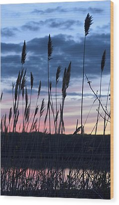 Connecticut Sunset With Reeds Series 4 Wood Print