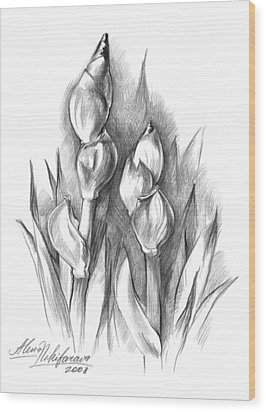 Conte Pencil Sketch Of Two Irises Wood Print