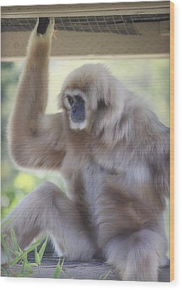 Contemplating Gibbon Wood Print by Melanie Lankford Photography
