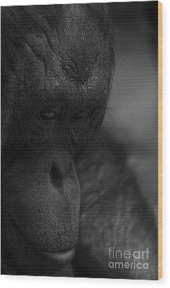 Contemplating Orangutan Wood Print