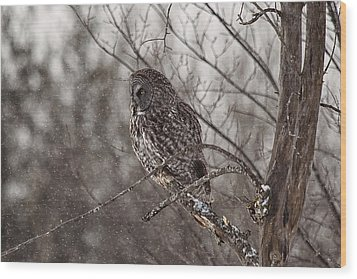 Contemplating Winter Wood Print by Eunice Gibb