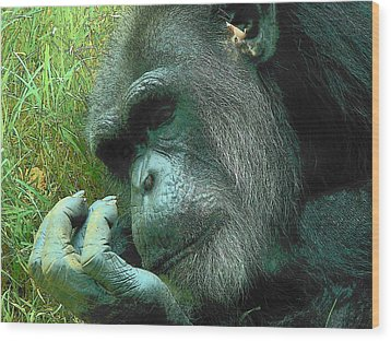 Wood Print featuring the photograph Contemplative Chimp by Rodney Lee Williams