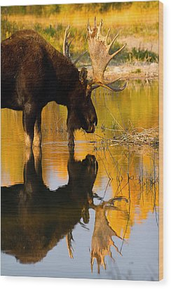 Wood Print featuring the photograph Contemplative Moose by Aaron Whittemore