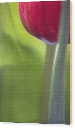 Contemporary Tulip Close Up Wood Print by Natalie Kinnear