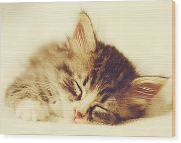Content Kitty Wood Print by Pam  Holdsworth