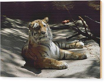 Content Tiger Wood Print