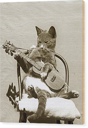 Cool Cat Playing A Guitar Circa 1900 Historical Photo By Photo  Henry King Nourse Wood Print