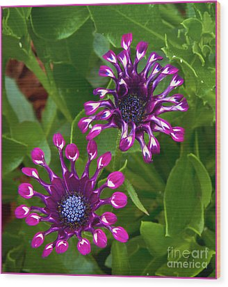 Cool Flowers Wood Print by Timothy J Berndt