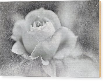 Wood Print featuring the photograph Cool Rose by Annie Snel