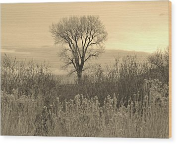 Wood Print featuring the photograph Cool Shadows by Marilyn Diaz
