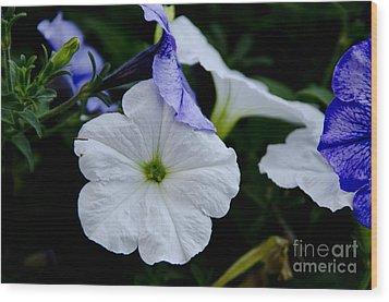 Wood Print featuring the photograph Cool Summer Petunias by Wilma  Birdwell