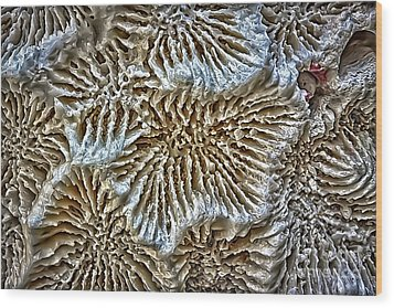 Coral 1 Wood Print by Walt Foegelle