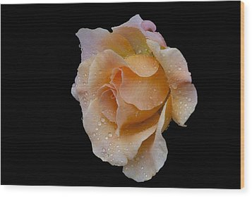 Wood Print featuring the photograph Coral Cutie by Doug Norkum
