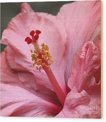 Coral Hibiscus Wood Print by Sabrina L Ryan