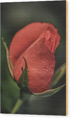 Wood Print featuring the photograph Coral Rosebud by Debbie Karnes